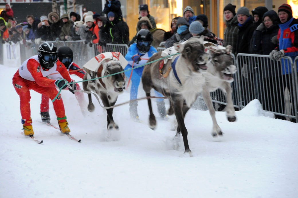 Reindeer_race,_Tromsø_Norway